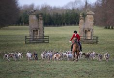 The Grafton Hunt met for the traditional Stirrup Cup at Easton Neston House and grounds on Boxing Day 2012 led by Huntsman Mick Wills