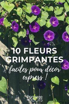 10 fleurs grimpantes annuelles, faciles, pour décor express #jardin #jardinage #fleur #grimpante #plante