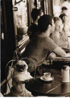 Buenos días! Un café y arrancamos... #doglovers #goodmorningsun