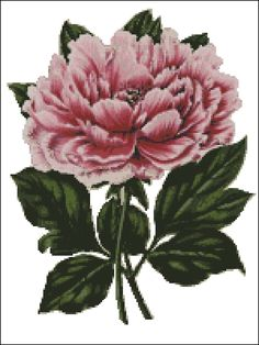 vintage peony cross stitch pattern this site has many free patterns