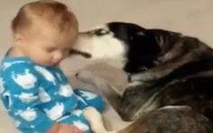 Milé dieťa a pes