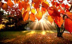 fall-inspired-desktop-backgrounds-15