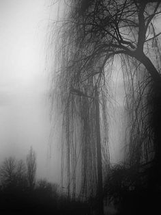 ☾ Midnight Dreams ☽ dreamy & dramatic black and white photography - Weeping Willow B&w Tumblr, Foto Art, Nocturne, Dark Art, Black And White Photography, Mists, Art Photography, Scenery, Images