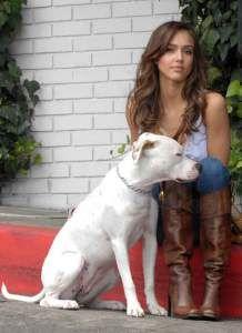 Jessica Alba https://sugarpitbulls.wordpress.com/2015/03/17/mulheres-famosas-e-pitbulls-2/