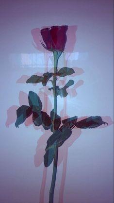 flower aesthetic 38 Ideas for flowers aesthetic grunge red Glitch Wallpaper, Tumblr Wallpaper, Rose Wallpaper, Aesthetic Iphone Wallpaper, Lock Screen Wallpaper, Aesthetic Wallpapers, Wallpaper Backgrounds, Nature Wallpaper, Tumblr Background