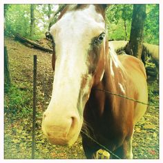 One of the many gorgeous trail horses that call Cades Cove home. Those eyes, am I right?!
