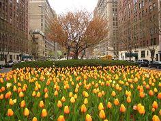 Grote paniek aan Park Avenue in de Upper East Side