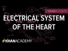 See where the pacemaker cells start the electrical wave of depolarization, and how it gets all the way to the ventricles of the heart.  Rishi is a pediatric infectious disease physician and works at Khan Academy.
