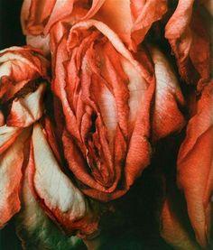 Vulva flor de Hermann Foersterling