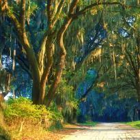 Oak Trees, ©Explore Georgia