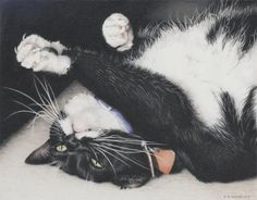 """Amy S. Turner - """"Lizzie - Can't Resist the Cuteness"""" Colored Pencil Artwork.  Cute tuxedo cats...."""