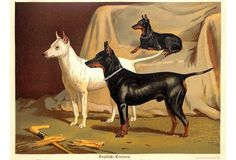 English Terriers, C. 1885