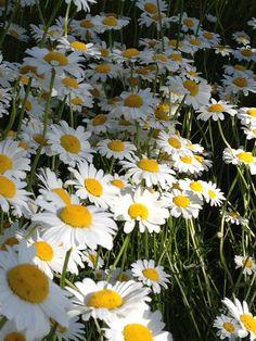 cute little flowers Little Flowers, Cute, Plants, Pictures, Lawn And Garden, Photos, Kawaii, Plant, Grimm