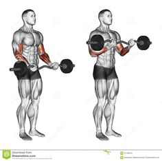 Exercising. EZ Bar Curls - Download From Over 62 Million High Quality Stock Photos, Images, Vectors. Sign up for FREE today. Image: 67126643