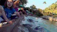 O golfinho assassino!