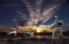 GULLS IN CONVERSATION  Seagulls, birds, waterbirds, bird photography, animal photography, pictures of birds, clouds, cloud photography, skies, sky photography, wildlife