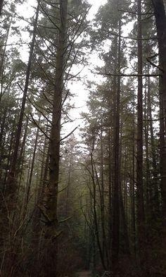 Poem in progress: Forest.