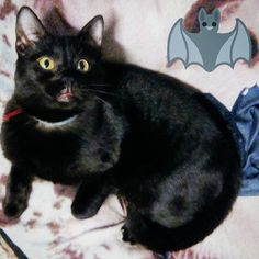 Pipistrello ed il suo alter ego.  #adorable #catsofinstagram #gatto #cute #cat #cats #catstagram #pets #instacat #dog #kitty #catlover #gattogram #lovecats #dogsofinstagram #kitten #gatti #puppy #catoftheday #pet #catsagram #gattone #love #meow #gattonero #kids #kittens #dogs #instagramcats #gattorosso