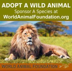 http://www.worldanimal.foundation/