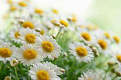 10 plantas que funcionam como antidepressivos naturais | SAPO Lifestyle