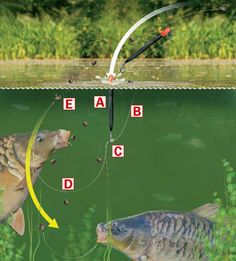 How to fish for commercial carp using a splasher waggler rig