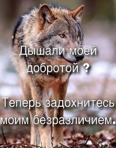 Хе Some Quotes, Wisdom Quotes, My Mind Quotes, Favorite Quotes, Best Quotes, Hello Memes, Russian Quotes, Truth Of Life, Clever Quotes