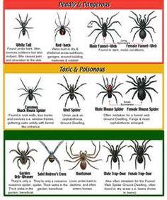 Usa spider chart