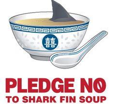 心ledge no to shark fin soup !