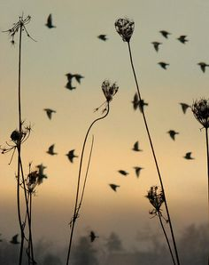 Gothic And Crows Art Photography