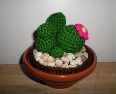 Cactus redondo con flor rosa.