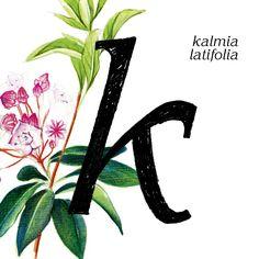 """Tipografía """"korinna"""" y """"laurel de montaña"""" #36daysoftype03 #36days_K #36daysoftype"""