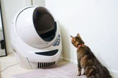 Tired of having to endure the horrendous smell of Mufasa's litter box? Check out this list of the best automatic litter boxes for One less chore to worry about! Funny Cat Videos, Funny Cat Pictures, Automatic Litter Box, Best Litter Box, Litter Robot, Self Cleaning Litter Box, Liter Box, Mystery, Small Kittens