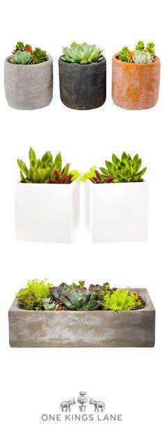 One Kings Lane's foolproof DIY terrariums kits. Looks like good plants for Hobbiton