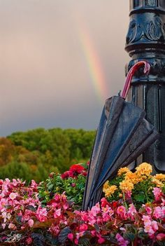 Do you see the rainbow in the background? This just makes me think of being on an Hawaiian island! Rainbow Sky, Over The Rainbow, Rainbow Magic, Rainbow Colors, Rain Wallpapers, Rainy Days, Pretty Pictures, Mother Nature, Art Photography