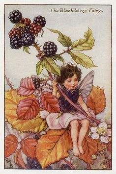 """Vintage print 'The Blackberry Fairy' by Cicely Mary Barker from """"The Book of the Flower Fairies""""; Poem and Pictures by Cicely Mary Barker, Published by Blackie & Son Limited, London [Flower Fairies - Autumn] Cicely Mary Barker, Decoupage, Autumn Fairy, Vintage Fairies, Flower Fairies, Fantasy Illustration, Fairy Art, Faeries, Illustrators"""