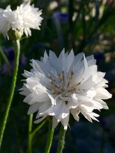Летние цветы 😍🌺