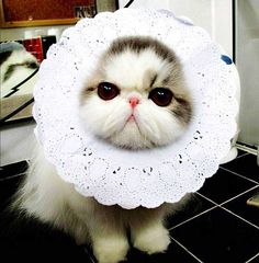 Beautiful Kity More cute images of cats and kittens, visit http://pewpaw.com/beautiful-kity/