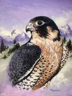 Peregrine Falcon Painting  - Peregrine Falcon Fine Art Print