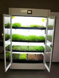 The Commercial Cultivator ™ Hydroponic Kitchen Garden - Unlike the Hyundai Nano Kitchen Garden, you can buy the Urban Cultivator™ right now! (It also comes in a residential model) click the link for more info