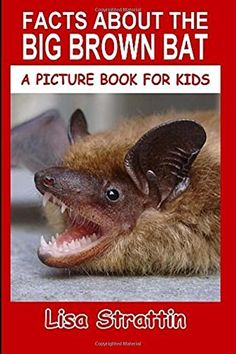 Facts About The Big Brown Bat (A Picture Book For Kids) (Volume 93), http://www.amazon.com/dp/1535047704/ref=cm_sw_r_pi_awdm_x_TmXZxbAQZ8GP7