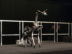 Forget Drones: Google's Robot Dogs Can Make Delivieries