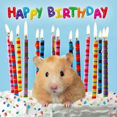 Happy Birthday Animals, Free Happy Birthday Cards, Happy 8th Birthday, Animal Birthday, Birthday Greeting Cards, Birthday Greetings, Hamsters, Birthday Crafts, Birthday Pictures