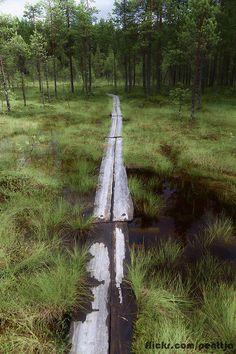 Swamp path, Finland