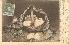Chicks in basket Nice antique postcard by sharonfostervintage, $4.00