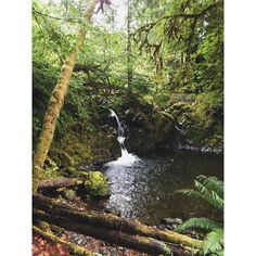 Quinault Rainforest, Olympic National Park. Washington. PC: Bodhikai Imagery- #iphoneonly #travel #nationalpark #olympicpeninsula #waterfall #rainforest #summer #olympicnationalpark #washington #pacificnorthwest #roadtrip