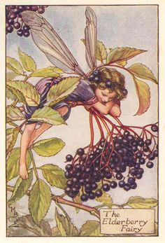 lavender fairy print - elderberry