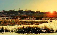 Estuario do Sado, Portugal