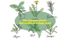 Herbs that are good for you http://www.latimes.com/health/la-he-healing-garden-herbs-20150626-htmlstory.html