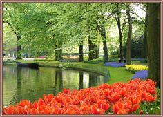 "The Keukenhof ""kitchen garden,"" in the Netherlands."