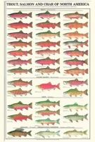 Fish Posters | Charting Nature - Vintage Botanical, Fish and Wild Bird Art Prints